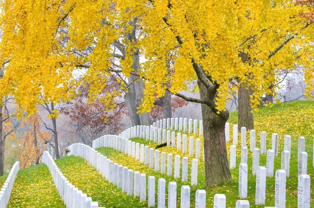 Mùa thu tại nghĩa trang Nghĩa trang Arlington National